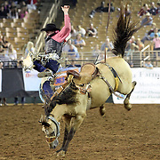 A saddle bronc rider gets thrown off  during the 129th performance of the PRCA Silver Spurs Rodeo at the Silver Spurs Arena   on Friday, June 1, 2012 in Kissimmee, Florida. (AP Photo/Alex Menendez) Silver Spurs rodeo action in Kissimee, Florida. PRCA rodeo event in Florida. The 129th annual running of the cowboy event.