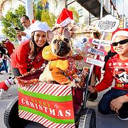 Gaslamp Quarter Pet Parade 2015