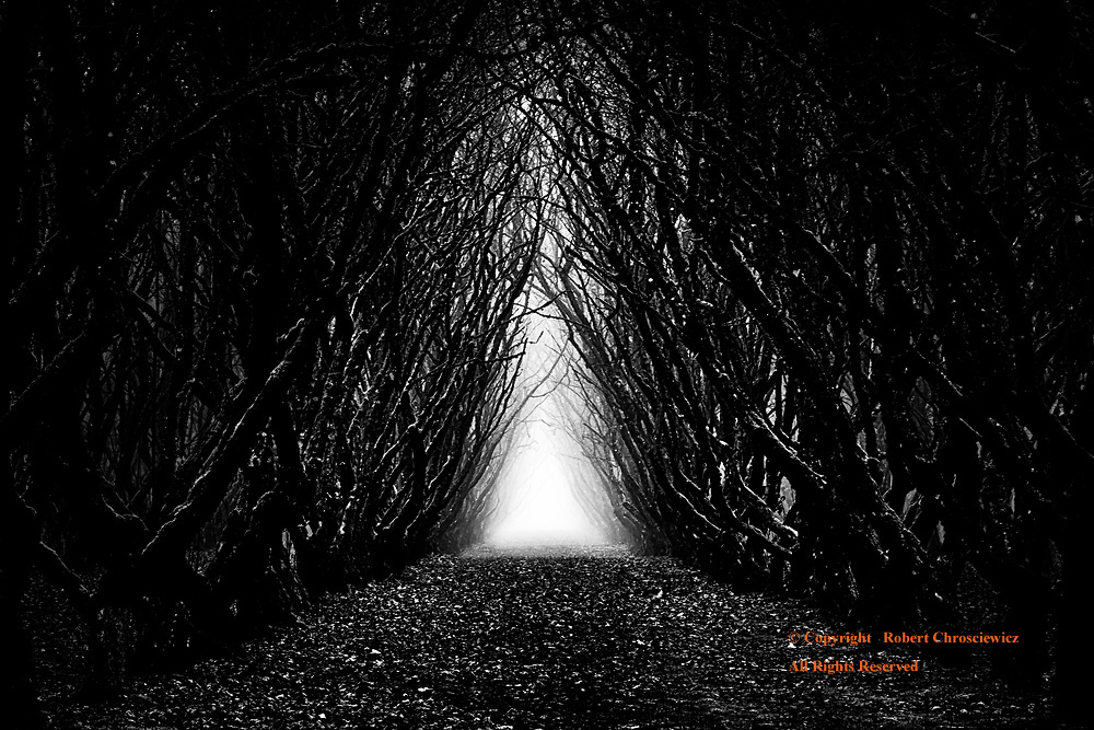 Grimm (B&W):  Not unlike a scene from a Brothers Grimm tale; this eerie winter setting captures a fog shrouded path lined with menacingly barren hazelnut trees and leads the eye out from the fearful dark and onto the tentative hope born of a distant light, Agassiz British Columbia, Canada.