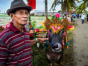 30 JULY 2017 - TUWED, JEMBRANA, BALI, INDONESIA: A Balinese man holds one of his water buffalo while he watches a makepung (buffalo race) in Tuwed, Jembrana in southwest Bali. Makepung is buffalo racing in the district of Jembrana, on the west end of Bali. The Makepung season starts in July and ends in November. A man sitting in a small cart drives a pair of buffalo bulls around a track cut through rice fields in the district. It's a popular local past time that draws spectators from across western Bali.    PHOTO BY JACK KURTZ
