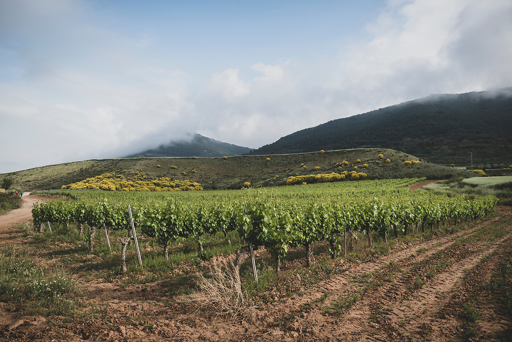 Pilgrims on the Camino de Santiago (far left) pass vineyards as they near the small town of Cirauqui, Navarre, Spain.<br />June 4, 2018.