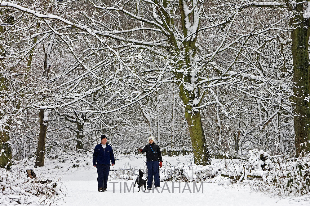 Couple walk the dog on a winter's day across snow-covered Hampstead Heath, North London, United Kingdom