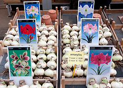 Flower bulbs for sale in flower market in central Amsterdam in Netherlands