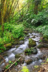 Kolekole streams and bamboo forest, Akaka Falls State Park, Hilo, Big Island, Hawaii