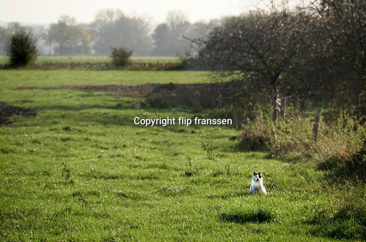 Nederland, Ooijpolder, 6-11-2020 Een kat, poes, zit in het gras in een weiland te wachten op een prooi .In dit gebied is een mega zonnepark van 60 ha. gepland door de gemeente Berg en Dal . Het mega zonneveld moet tussen Leuth en Millingen aan de Rijn komen en veel inwoners vinden de plannen te ambitieus en de oppervlakte groot . De Ooijpolder is een groot gebied langs de Waal tussen Nijmegen en de Duitse grens. Delen ervan zijn door staatsbosbeheer beheerd natuurgebied waaronder de millingerwaard en het maakt deel uit van de gelderse poort . Foto: ANP/ Hollandse Hoogte/ Flip Franssen