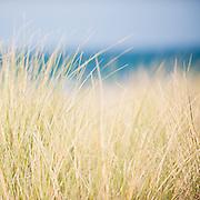Marram grass on the sand dunes, Isle of Man.