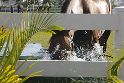 Horse drinking<br /> Olympic Games Hong Kong 2008<br /> Photo © Dirk Caremans - Hippo Foto