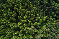 Norriston Tract - a potential section of forest along the Oregon coast in danger of being clearcut  by Oregon Department of Forestry. Hug Point Oregon.