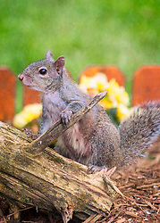 Well it seems that Mr. Squirrel has found my birdfeeders and is looking to find a way up