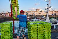 France, Loire-Atlantique (44), Presqu'île de Guerande, La Turballe, port de pêche, a fondé son activité sur la pêche à la sardine  // France, Loire-Atlantique, La Turballe, sardine fishing port