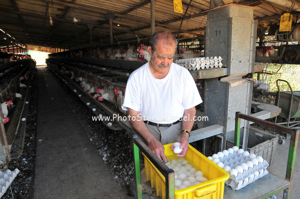 Egg farming. Farmer washes eggs before packing and shipping to market Photographed in Israel