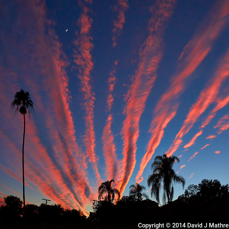 Moon, Palm Tree Silhouettes, and Orange Contrail Clouds at Sunset in St. Petersburg, Florida. Image taken with a Leica T camera and 11-23 mm wide-angle zoom lens (ISO 400, 18 mm, f/6.4, 1/640 sec).