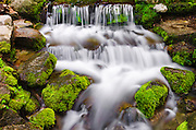 Fern Spring, Yosemite National Park, California