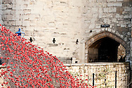 Blood Swept Lands and Seas of Red. A field of 888,246 ceramic poppies fills the moat surrounding the Tower of London - an art installation created by ceramic artist Paul Cummins (12 November 2014). Over the next ten days, volunteers will remove the hand-made poppies, which were installed in the weeks leading up to Remembrance Day, on the 100th anniversary of the outbreak of the First World War. © Rudolf Abraham