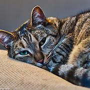 Yogix The Cat