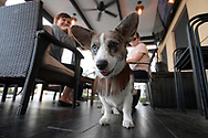 Jillian Quain, left, and Molly Meyers sit with their dogs in the outdoor patio area of The Brass Tap craft beer bar in the Mills Park development in the Mills 50 district of Orlando, Fla., Monday, Oct. 17, 2016. (Phelan M. Ebenhack via AP)