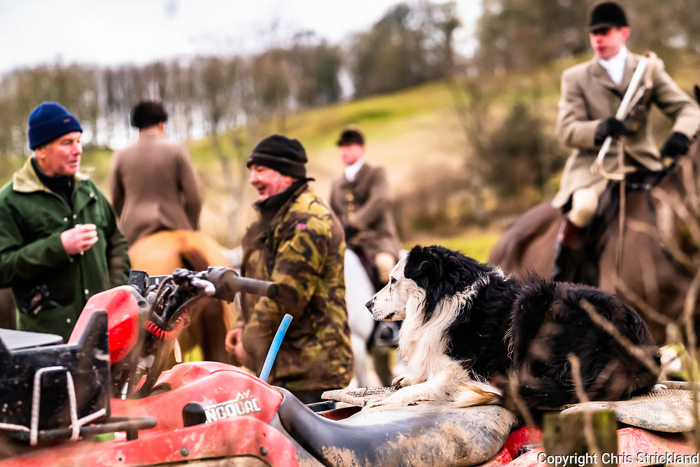 Lilliesleaf, Selkirk, Scottish Borders, UK. 12th January 2019.  The Duke of the Buccleuch Hunt meet near Lilliesleaf village in the Borders, proceeding to flush foxes from covert to guns.