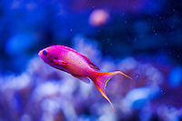 Exotic Fish (checking on the name)
