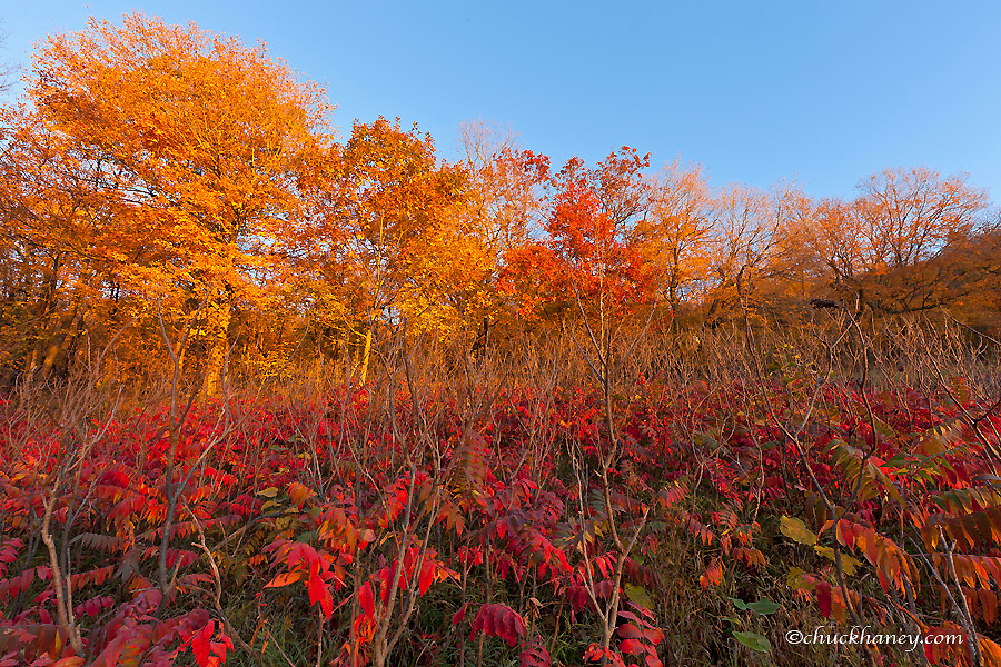 Sumac and maple trees autumn colors in Maplewood State Park near Pelican Rapids, Minnesota, USA