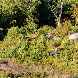 A man mountain biking on the summit of Mount Agamenticus in York, Maine.