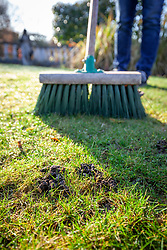 Brushing worm casts on a lawn with a broom