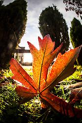 Winter sunlight through leaves in my garden..©Michael Schofield.