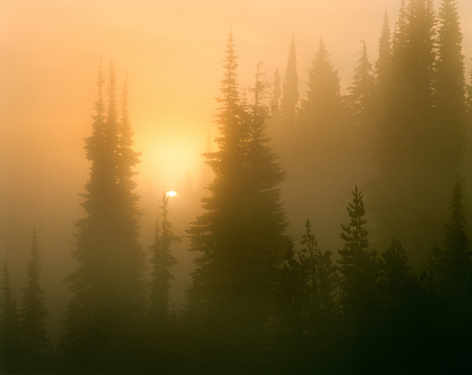 The sun rises through fog in Three Sister's Wilderness in the Oregon Cascades Range. ©Ric Ergenbright