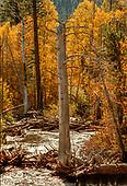 Landscaoes/Nature