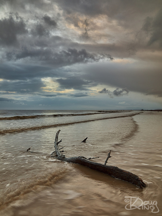 A large piece of driftwood lying at the top of the tide under a stormy sky.