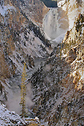 The Lower Falls of the Yellowstone in The Grand Canyon of the Yellowstone during early winter