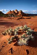 Cactus y formaciones de roca, Vermilion Cliffs National Monument, Arizona (Estados Unidos)