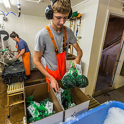 Maverick Beal (owner Ralph Smith's grandson) boxing 2 pund bags of processed mussels at Moosabec Mussels, Inc. in Jonesport., Maine. Maverick's aunt Bobbi-Jo Dame is in the background.