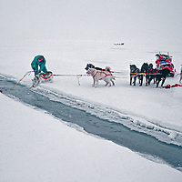 Mushers rescue a dog from an open water lead on the frozen Arctic Ocean.