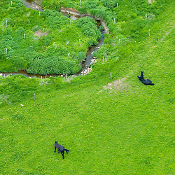 Aerial view of 2 horses