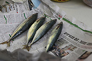 Mackerel fish on newspaper