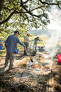 The Boutards of Ayers Creek read an article about burning fresh wheat to make frikeh and then figured out how to do it themselves. Here, the freshly cut wheat is being torched under a big oak on the farm.