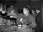 21/11/1956<br /> 11/21/1956<br /> 21 November 1956<br /> <br /> Canary and Bird Society of Ireland Annual Show