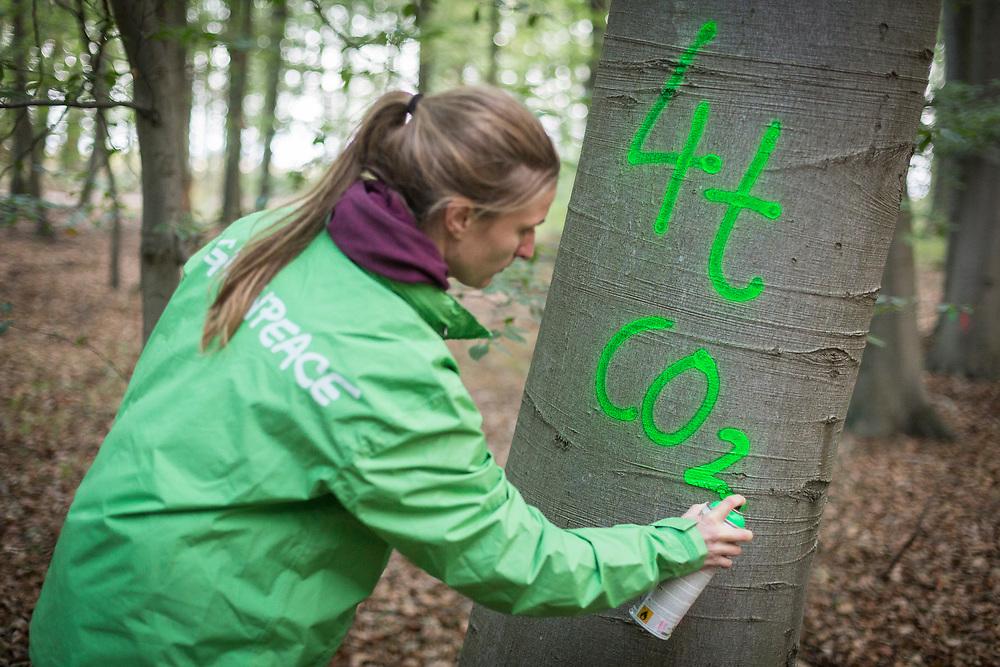 Kerpen-Buir, DEU, 14.09.2018<br /> <br /> Greenpeace - Aktivist*innen kartieren Baeume im Hambacher Forst zur Bestimmung der CO2-Speicherung.<br /> <br /> Greenpeace - Activists mapping trees in Hambach Forest to determine CO2 storage.<br /> Foto: Bernd Lauter/berndlauter.com