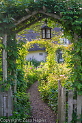 Cottage garden with rose arches, picket fence and gate. Path leading through borders of Alliums, hardy geraniums and Lupinus - lupins in June. Clover Cottage