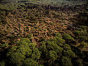 Aerial view of the devastation of the forest heritage caused by a tornado in the Duna Feniglia natural reserve in the municipality of Orbetello (Grosseto). The whirlwind hit the area of the Orbetello lagoon on the night of November 16-17. The event involved a total area of about 8 hectares of pine forest: at a first estimate about 1,000 domestic pine trees were eradicated and nipped. Feniglia is the strip of land that connects the Ansedonia coast to the Argentario, separating the sea from the Orbetello lagoon. Daniele Zendroni / VisiOnAir / OneShot