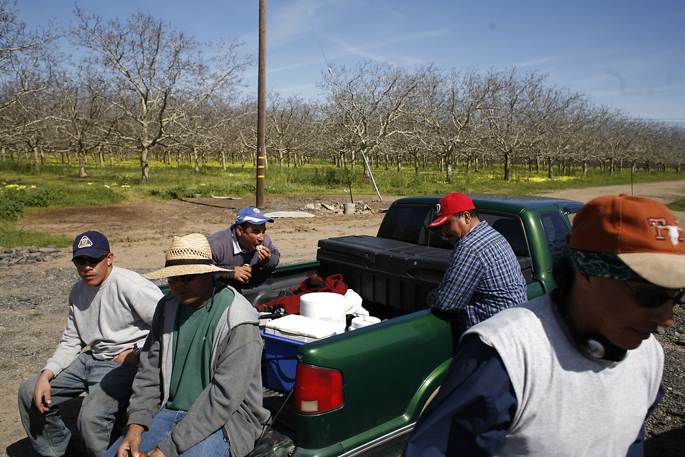 Farmworkers take a lunch break from planting new plum trees near Gridley, California on March 11, 2010. This region of California, between Sacramento and Chico, is responsible for nearly all the plum and prune production in the United States.<br /> <br /> (https://www.cdfa.ca.gov/statistics/PDFs/2015Report.pdf)