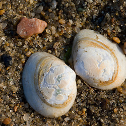 Shells on the beach at Griswold Point Preserve in Old Lyme Connecticut USA