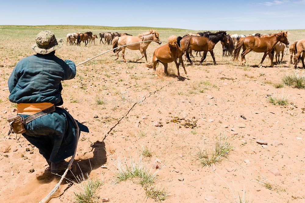 A wrangler catching a horse in the grasslands of Dundgov Province, Mongolia. Photo © Robert van Sluis