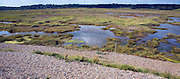 Freshwater Dingle marshes in lagoon formed by the beach bar between Orford and Walberswick, Suffolk, England