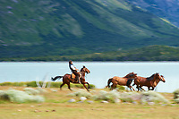 Gaucho riding a horse at Estancia Helsingfors in Patagonia. Image taken with a Nikon D3s camera and 24-120 mm f/4  lens (ISO 200, 120 mm, f/18, 1/50 sec)