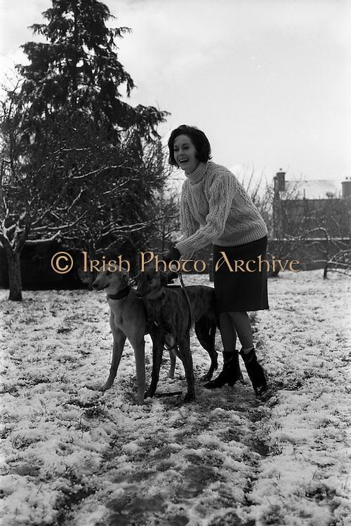 27/12/1962<br /> 12/27/1962<br /> 27 December 1962<br /> Orla Ní Shíochain, Dublin Model working in Paris home for Christmas at Rathfarnham Park, Dublin with two of her parent's greyhounds.
