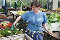 Trinity Organic Farm, Nottinghamshire - trainee gardener watering plants in greenhouse