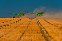 Combine harvestors during the wheat harvest, Schields & Sons Farming, Goodland, Kansas USA.