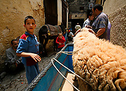 A young boy playing with a sheep in an alley-way inside the Fes el-Bali or the old city of Fes, Morocco, on Sunday afternoon, June 10, 2007. (PHOTO BY TIMOTHY D. BURDICK)