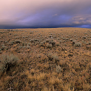 Sage brush and stormy skies in Yellowstone National Park.
